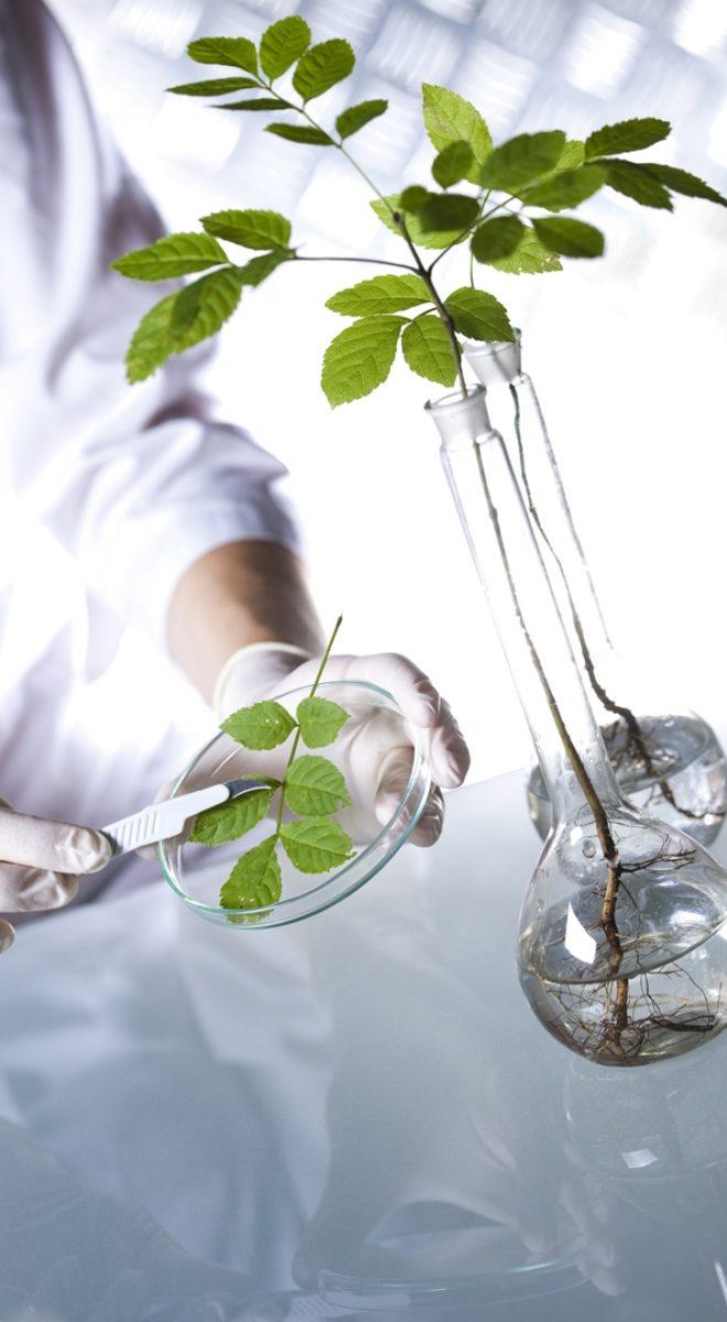 Biotechnology, Chemical laboratory glassware, bio organic modern concept